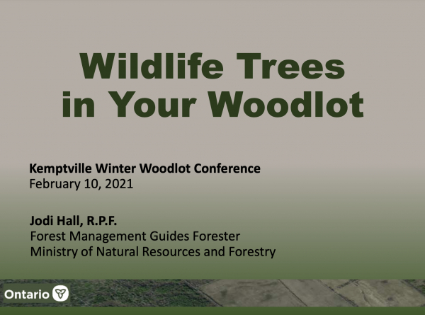 Wildlife Trees in your Woodlot