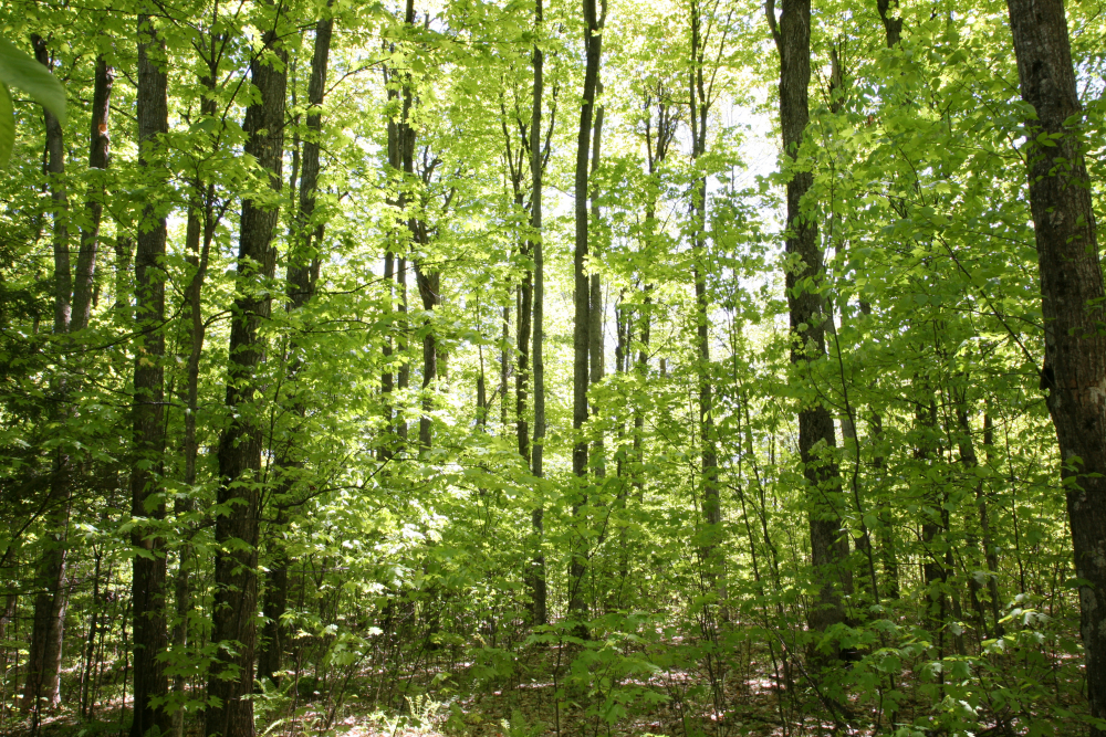 Bruce County leads the way as first community forest to sign up for development of forest carbon offset project