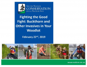 Fighting the Good Fight: Buckthorn and Other Invasives in Your Woodlot