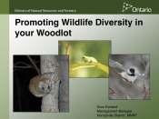 Promoting Wildlife Diversity in your Woodlot