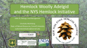 Hemlock Woolly Adelgid and the NYS Hemlock Initiative