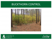Limerick Forest - Buckthorn Control Trial