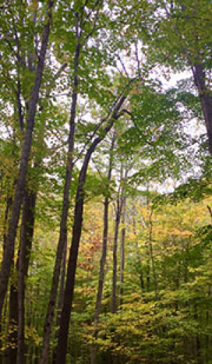 Continuing Education for Forest Managers: A Summary