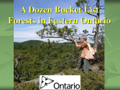 A Dozen Bucket List Forests in Eastern Ontario
