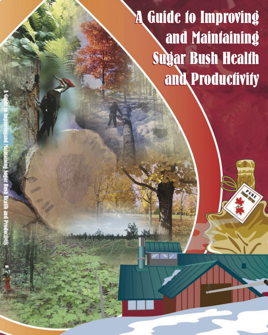 A Guide to Improving & Maintaining Sugar Bush Health & Productivity