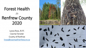 Forest Health in Renfrew County - 2021 Pest Review Presentation