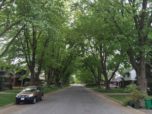 Urban Forests: Progress and Challenges