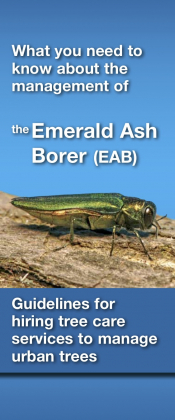What you need to know about the management of the Emerald Ash Borer