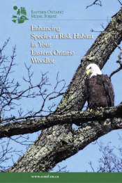 Enhancing Species at Risk Habitat in Your Eastern Ontario Woodlot