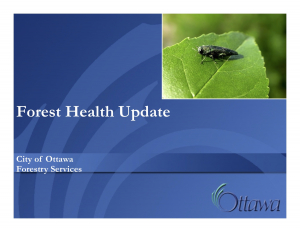 Forest Health Update